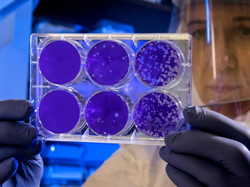 Stem Cells smpltec